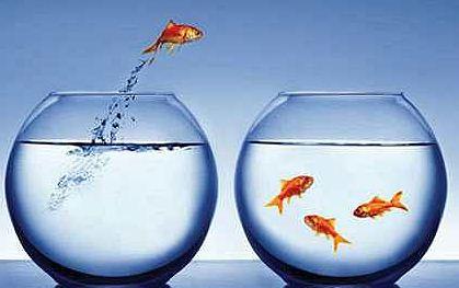 changing fish